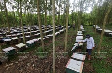 Farmers hope to get rich from beekeeping