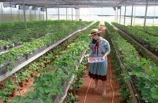 Agrotourism makes first moves in Khanh Hoa