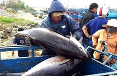 Ministry urges localities to continue fighting IUU fishing