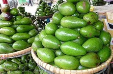Avocado festival of M'Nong ethnic group re-enacted