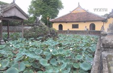 Precious white lotus species to be grown in Hue