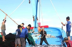 """Binh Dinh makes efforts to remove EC's """"yellow card"""" on seafood"""