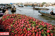 Mekong Delta region charms visitors