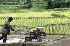 Thai farmers seek government's aid