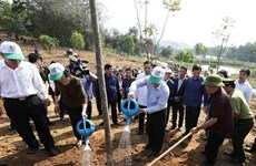 Tree planting - a traditional custom in Lunar New Year festival