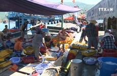 Da Nang city fights illegal fishing
