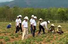 Quang Binh develops hillside medicinal plants