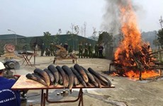 Elephant tusk destruction should become a practice: ENV