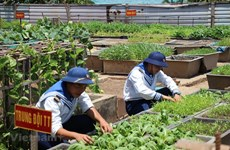 "Article 1: ""Green vitality"" remains in Truong Sa"