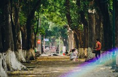 Golden leaves fall on most romantic street in Hanoi