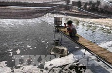 Bac Giang looks to build 130 high-tech intensive aquaculture models