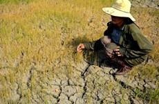 Gender equality integration crucial to climate policies in Vietnam: Report