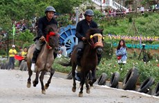 Reviving horse racing tradition in Lao Cai's Bac Ha