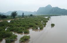 Vietnam's biodiversity declines at different levels