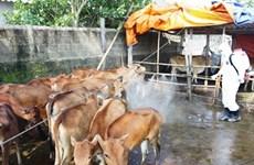 Vietnam proactive in preventing animal disease spread