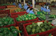Ben Tre tourism sees fruits of its labour