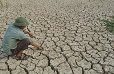 Over 150 billion VND needed to prevent drought in Hau Giang