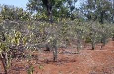 Dak Lak workshop focuses drought-prevention measures
