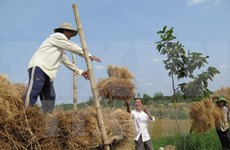 Korean NGO helps Cao Bang farmers improve income