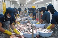 Export seafood quality not affected by mass fish deaths: VASEP