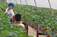 Japan eyes TPP investment in Vietnam's agriculture
