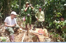 Lam Dong: Large-scale deforestation to face prosecution