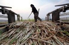 Thailand's sugar output declines from previous crop
