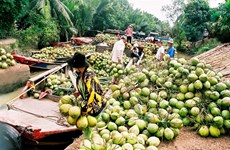 Ben Tre: Coconut growers, firms link up