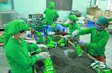 Shrinking prices lower Vietnam's tea export value