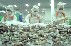 Australia considers import of Vietnam fresh shrimp
