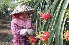Australia to import fresh Vietnamese dragon fruit
