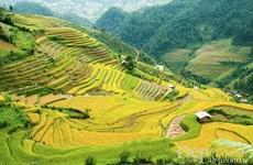 Vietnam, RoK cooperate to develop tourism
