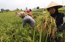 Indonesia: Stable food prices reduce poverty rate