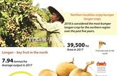 Northern localities enjoy bumper longan crops