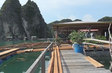 Ha Long turns fishing village into tourist site