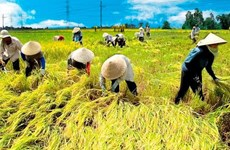 10th World Rice Conference held in Hanoi