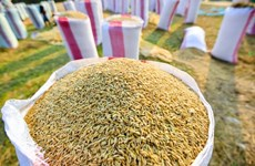 Vietnamese rice needs to raise its value
