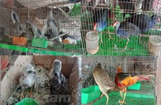 Strict punishments needed to stop wildlife trade