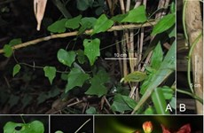 New plant and insect species found in Vietnam
