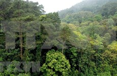Vinh Phuc works to increase forest growing area