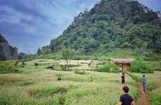 Buckwheat flower fields: unmissable check-in hotspots in Ha Giang