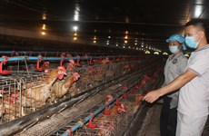 Bac Giang works to raise values of livestock products