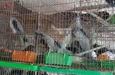 WWF calls for permanent shutdown of wildlife markets over COVID-19 concerns