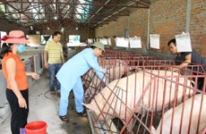 Vietnam can now produce foot-and-mouth disease vaccine