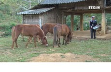 Effective mechanism needed for animal husbandry sector