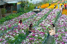 Flower farming increases over 9% in Dong Thap