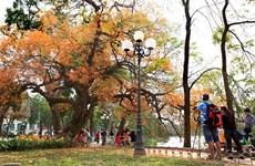 Hanoi's beauty during leaf changing season