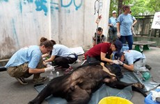 Three captive bears in Dong Nai sent to sanctuary