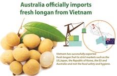 Australia officially imports fresh longan from Vietnam