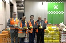 Vietnam's fresh longan makes debut in Australia